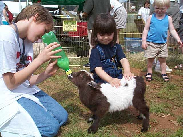 Petting Zoo Animals For Kid Party Birthday Petting