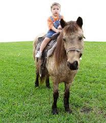pony rides kids miami