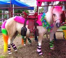 Pony Rides For Kid Party Birthday Pony Rides Miami A
