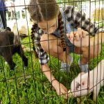 Kids love feeding our friendly petting zoo animals