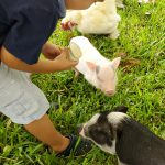Kids love petting and feeding our animals