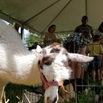 Our petting zoo has a variety of beautiful friendly animals