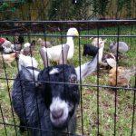 South Florida's favorite petting zoo