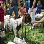 A petting zoo is perfect for kids of all ages